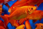 ساده ترین روش نگهداری از ماهی عید