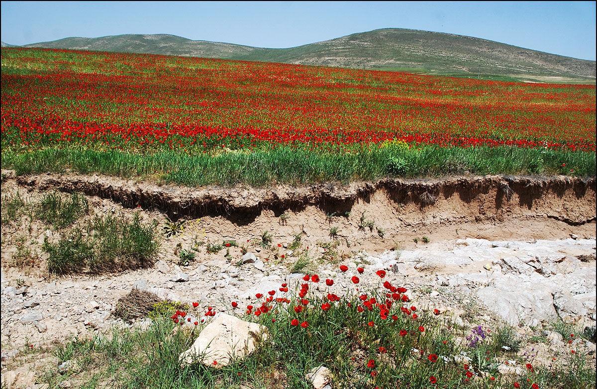 پارک ملی تندوره