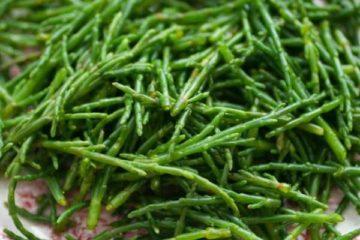 گیاه شورپسند «سالیکورنیا» برای جلوگیری از طغیان نمک دریاچه ارومیه کشت می شود