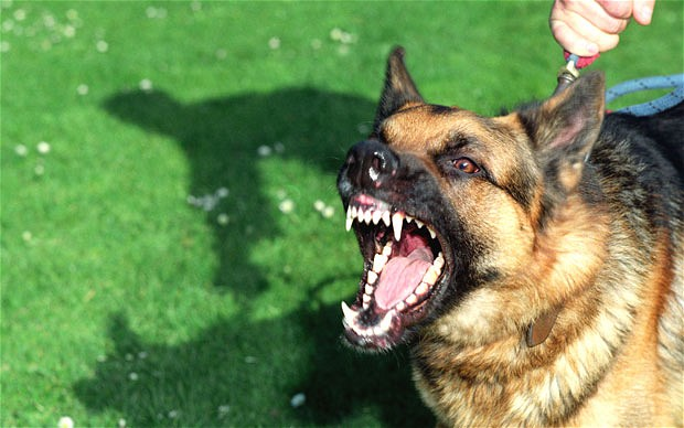 فرماندار هشترود خبر داد:۳۱۰ مورد حیوان گزیدگی در هشترود/صاحبان سگها مراقب باشند