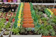 ایران هفدهمین تولیدکننده گل در جهان/ ۴۰ درصد گل تولیدی کشور از بین میرود