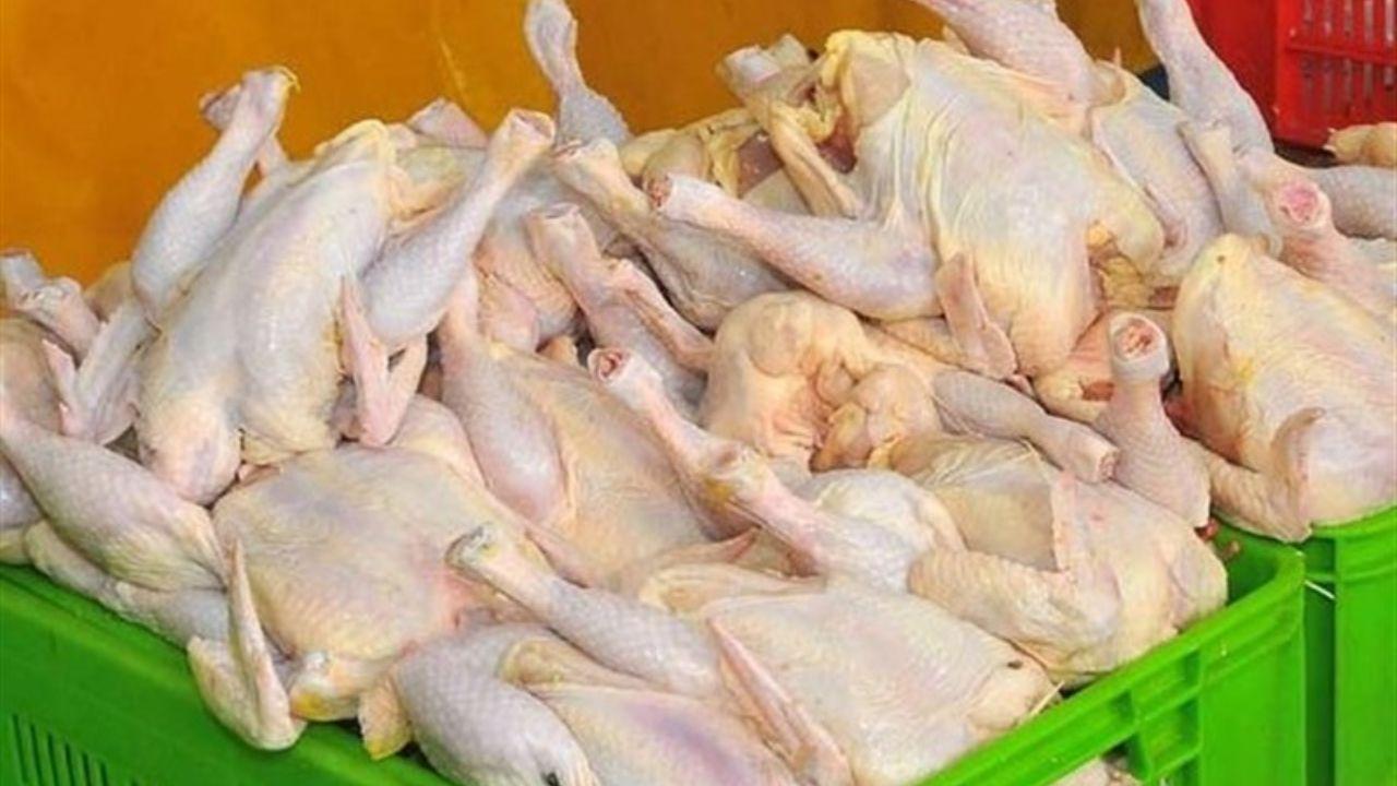 عرضه روزانه ۸۰۰ تن مرغ گرم و ۵۰۰ تن مرغ منجمد در تهران
