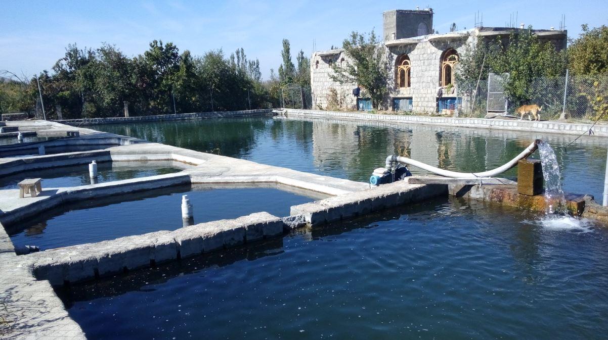آذربایجان غربی پیشرو در صنعت پرورش آبزیان