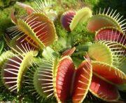 گیاهان حساس را به کمک اینترنت هوشمندانه پرورش دهیم