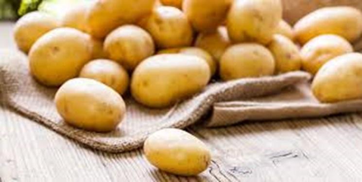 اردبیل قطب تولید بذر سیبزمینی کشور