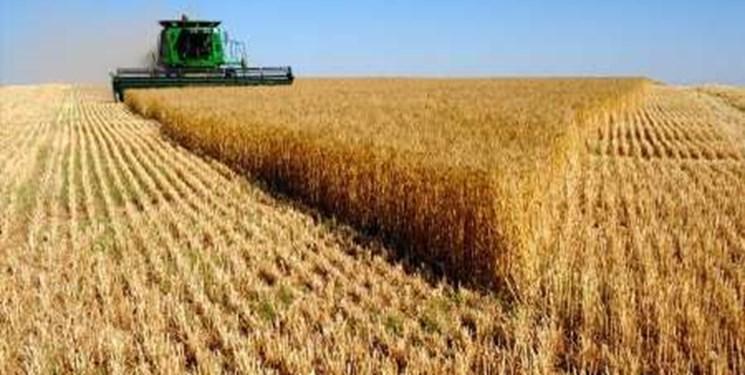 هیچ شخصی حق خارج کردن گندم از آذربایجان شرقی را ندارد