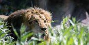 نجات «ایلدا» و «هیرمان» از خطر انقراض