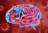 سکته مغزی ناشی از ویروس کرونا ۸ برابر آنفلوانزا است
