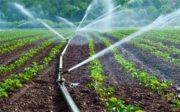 «کشاورزی»، ناجی اقتصاد| ۲۷۰هزار هکتار زمین در ایران مستعد احداث گلخانه با اشتغالزایی ۱.۷ میلیون نفری